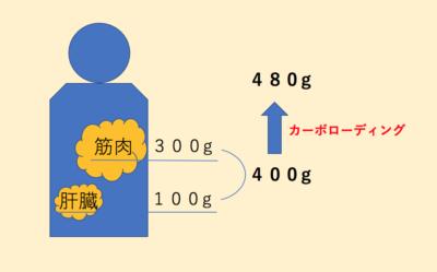 カーボローディングにより、通常の1.2倍のグリコーゲンを貯蔵できる
